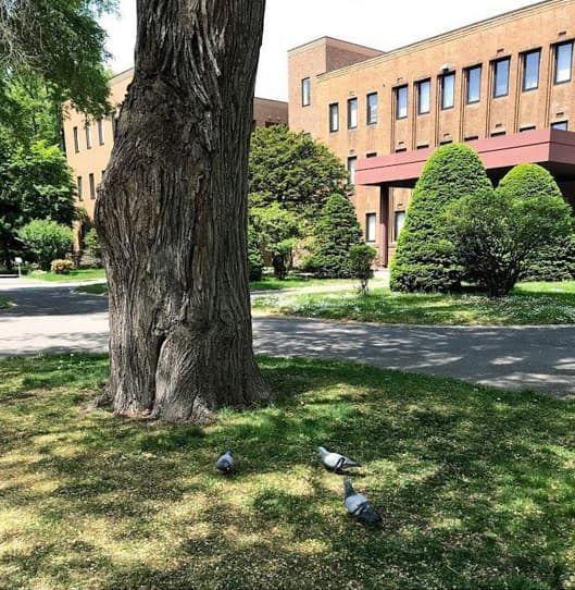 広大なキャンパス内の自然