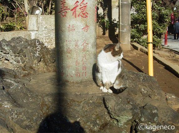 参道入ってすぐの猫