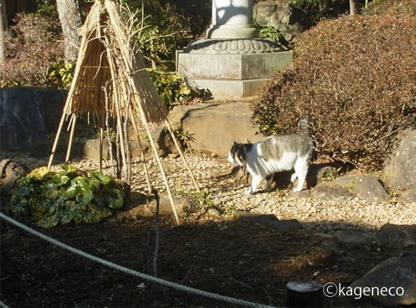 ゆっくり芝生を歩く猫