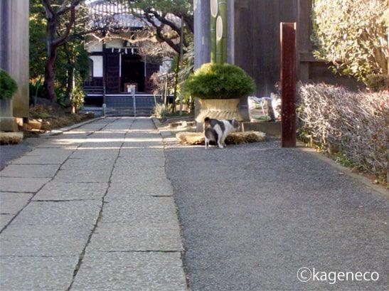 門松の匂いを嗅ぐ猫
