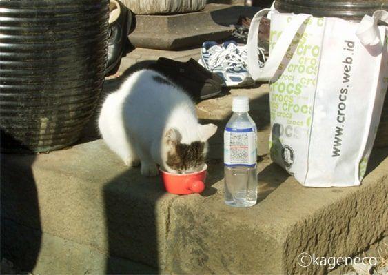 お寺で用意されたコップでごくごくと飲む猫