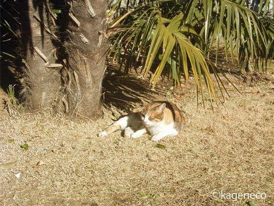 芝生でくつろぐ猫