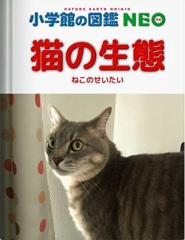 猫の生態-2