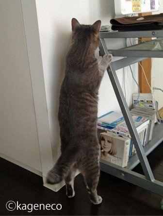 パソコンデスクにある何かを探す猫
