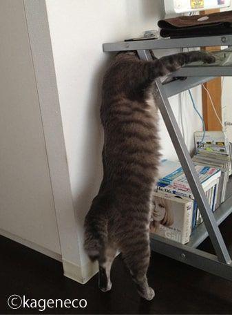 2本足のまま手を伸ばしてデスク上にある物を取ろうとする猫
