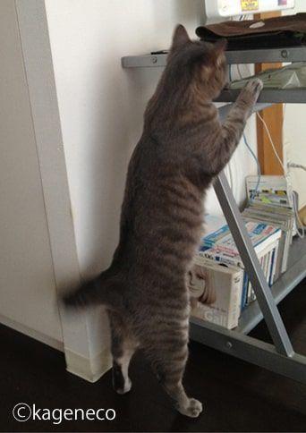 何とかして取りたい・・と探し続ける猫