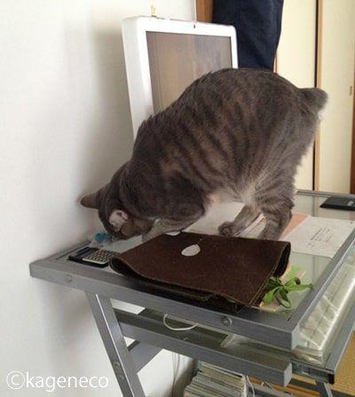 ついにデスク上に乗って探す猫