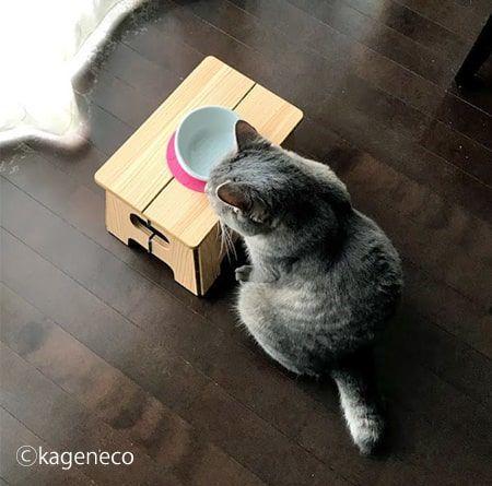 空っぽのお皿を見つめる猫