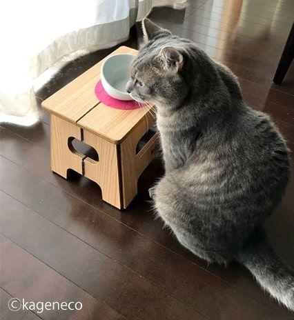空っぽのお皿を前に呆然とする猫