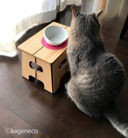 お皿が空なのできょろきょろする猫