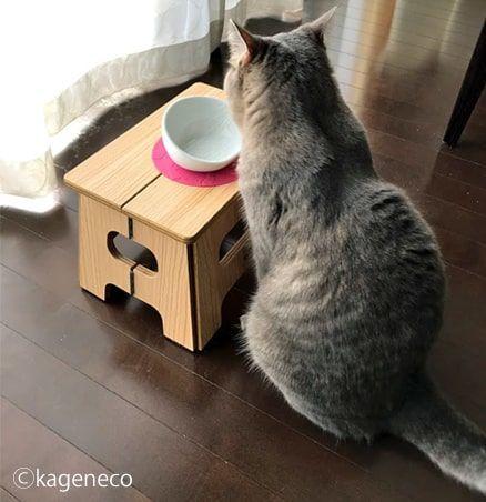 空になったお皿の前で座っていたけど何も出て来ない猫