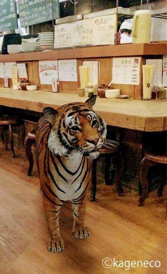 居酒屋に本物のトラが出現したかのようなARのトラ