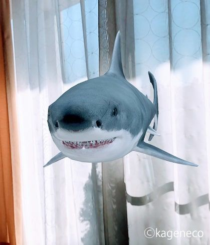 ARホホジロザメの正面から見た顔