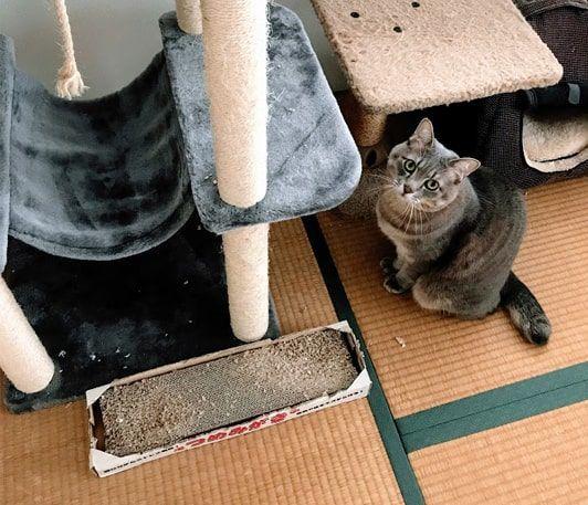 キャットタワー下から見上げる猫