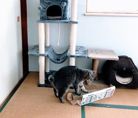 ボロボロになった爪とぎで爪を研ぐ猫