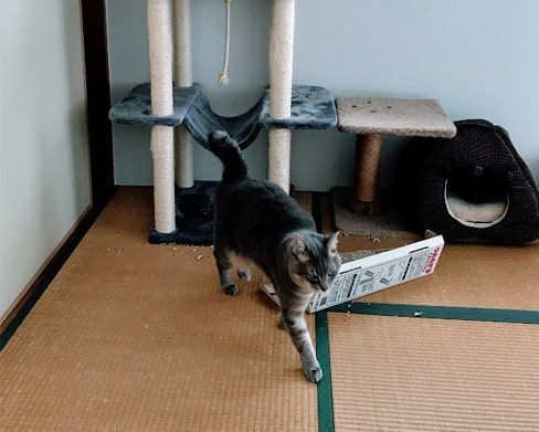 爪とぎに飽きた猫