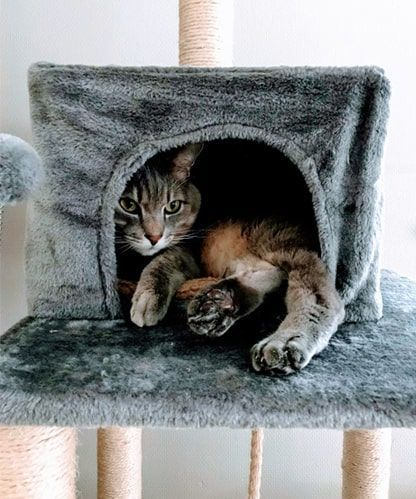 新キャットタワー内でまだ緊張気味な猫