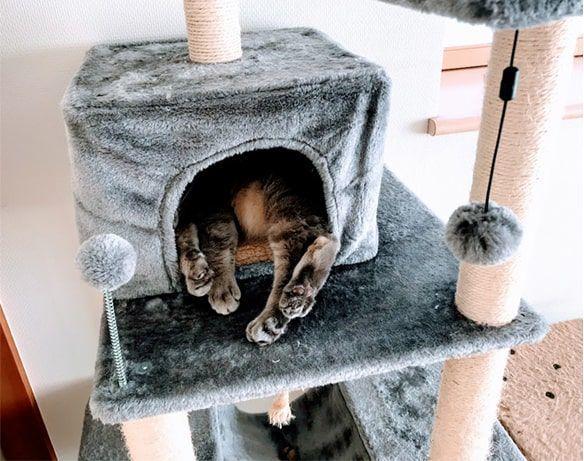 新タワー内の猫ハウス慣れてきたかな