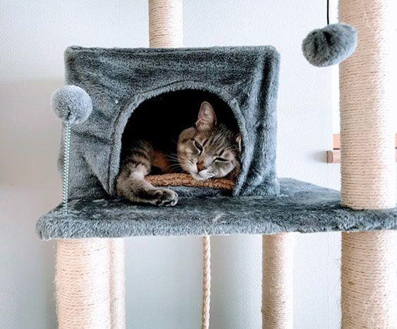 新タワーにだいぶ慣れてくつろいだ表情になってきた猫