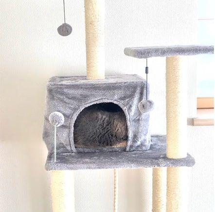 いつもと違うポーズで猫ハウスに入る猫