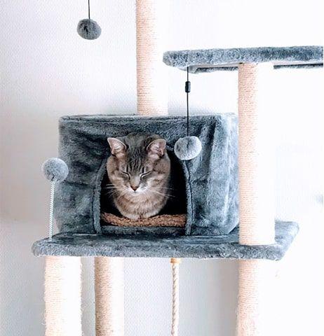 猫ハウスから顔だけ出して眠そうな猫