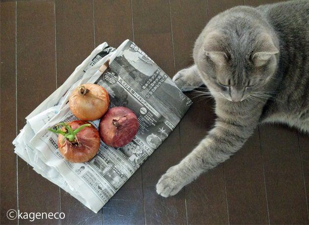 玉ねぎのそばでくつろぐ猫