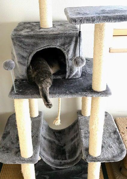 フェレットのように猫ハウスにもぐり込む猫