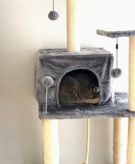 耳を少し出して猫ハウスで熟睡する猫