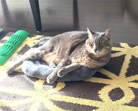 灰色マットからはみ出して寝そべる猫