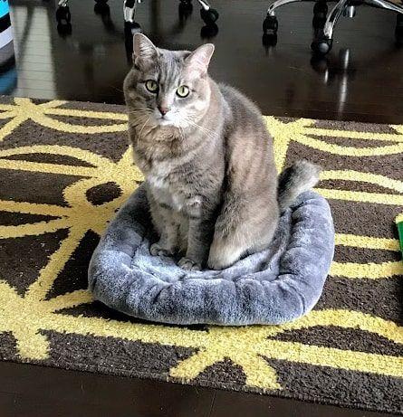 灰色マットにちょこんと座る猫