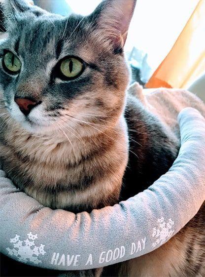 細長い隙間風防止クッションを首に巻いた猫