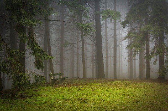 霧で覆われた森林