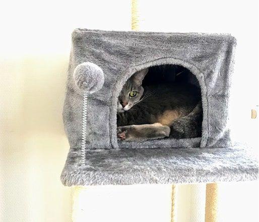 猫ハウスの中で流し目をしている猫