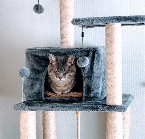 キャットタワーの猫ハウスから顔を出す猫