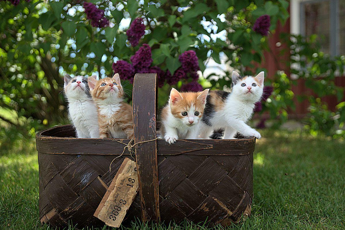 カゴの中から顔を出す子猫4匹