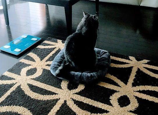 灰色マットに後ろ向きで座る猫