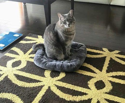 灰色マットにいつの間にか前向きで座る猫