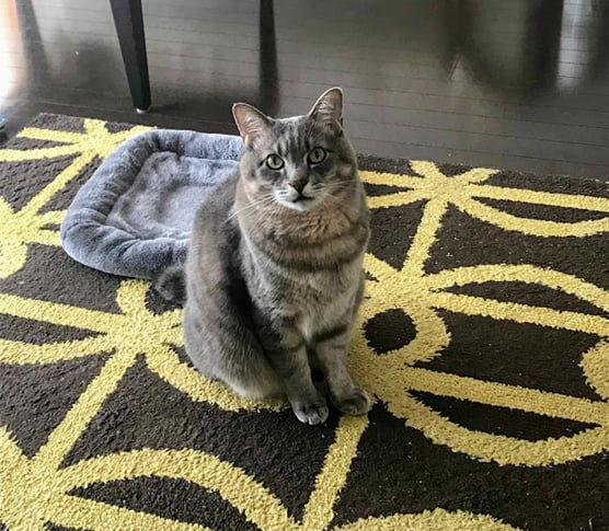 灰色マットの一歩前に座る猫