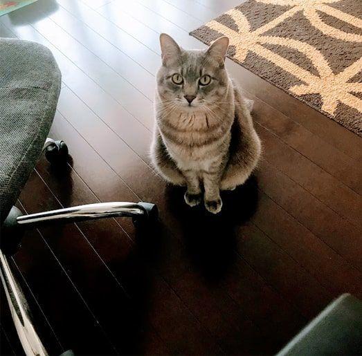 灰色マットから離れどんどん近づいて来る猫