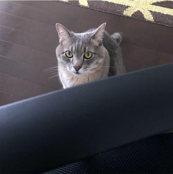 いつの間にか椅子の真下まで来ていた猫