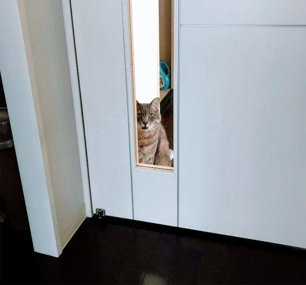 白い扉の窓からリビングを覗きこむ猫