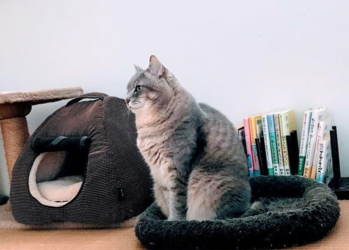 茶色マットに横向きに安定して座る猫
