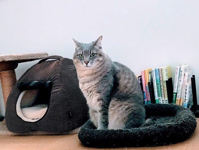 茶色マットにどっしり構えて座る猫