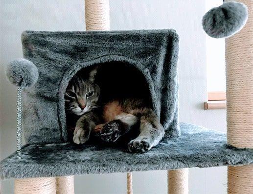 キャットタワーの猫ハウス内でどっしり構える猫