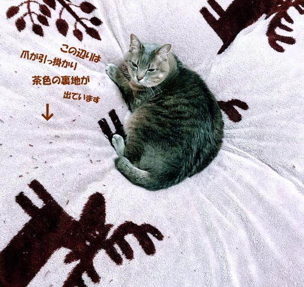 モコモコ布団カバーの上で渋い顔をする猫