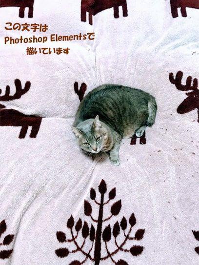 モコモコカバーの上でじろりを見る猫
