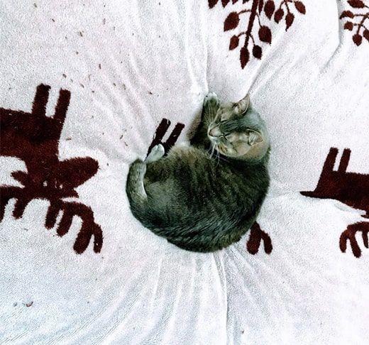 バレたかと言う顔をする猫