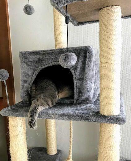 キャットタワー内の猫ハウスから片足を出し眠る猫