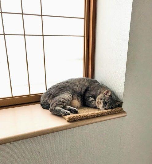 窓際に置かれたもこもこ中敷きの上で眠る猫