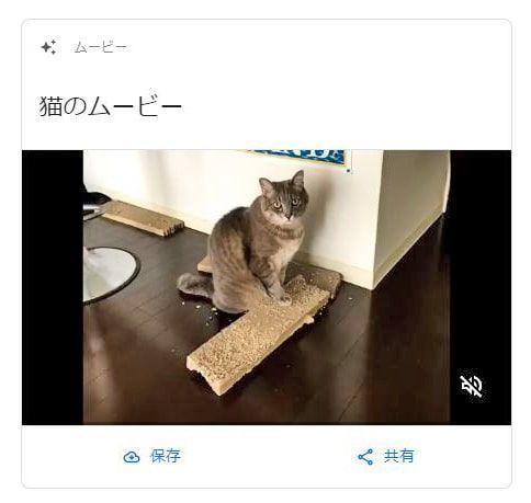 Googleさん作成の猫のムービー